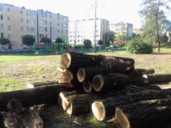 Dlaczego wycięto drzewa przy ul. Polnej?
