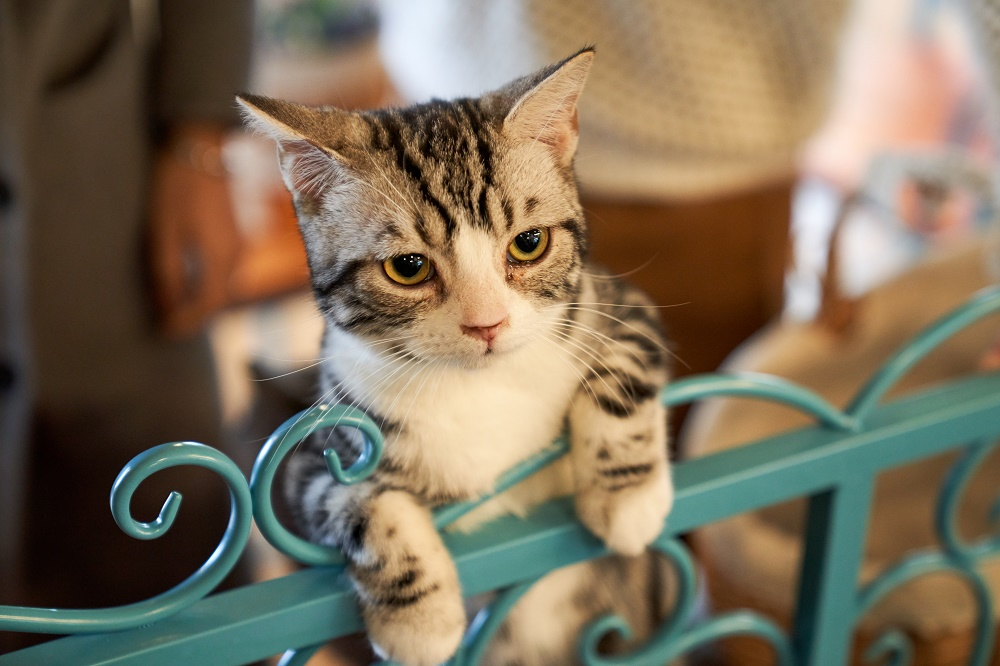 Dzisiaj obchodzimy Międzynarodowy Dzień Kota. Zobaczcie ciekawostki i memy o kotach