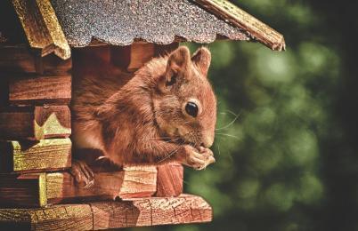 W mieście powstaną domki dla wiewiórek. Znamy ich dokładną lokalizację!